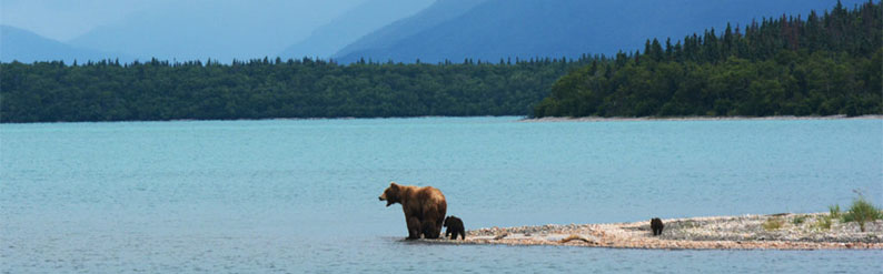 Mother bear with two cubs by lake
